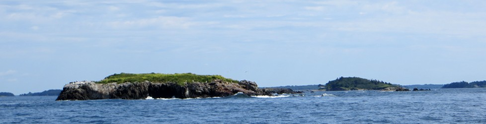 Maine Island Ecologists